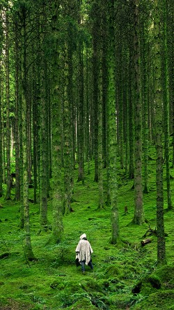papers.co-na48-in-wood-forest-green-mountain-nature-33-iphone6-wallpaper