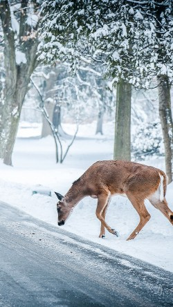 papers.co-nb25-christmas-deer-street-snow-winter-nature-animal-33-iphone6-wallpaper