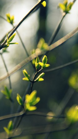papers.co-nb27-spring-leave-green-nature-bokeh-tree-33-iphone6-wallpaper