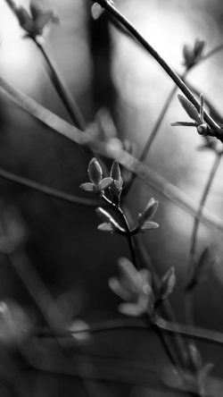 papers.co-nb29-spring-leave-green-nature-bokeh-tree-dark-bw-33-iphone6-wallpaper