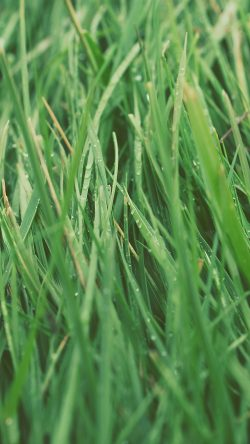 papers.co-nb52-after-rain-green-lawn-flower-nature-love-33-iphone6-wallpaper