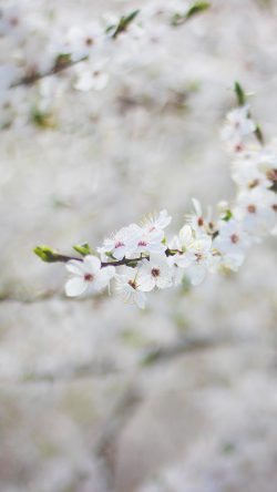 papers.co-nb64-spring-flower-cherry-blossom-bokeh-33-iphone6-wallpaper