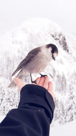 papers.co-nb92-bird-in-my-hand-snow-winter-cold-animal-33-iphone6-wallpaper