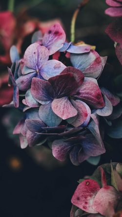 papers.co-nb94-flower-rainbow-color-dark-33-iphone6-wallpaper