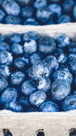 papers.co-nc20-blueberry-mart-fruit-nature-eat-food-33-iphone6-wallpaper
