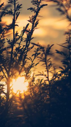 papers.co-nc29-sunset-tree-light-flare-bokeh-nature-photo-33-iphone6-wallpaper
