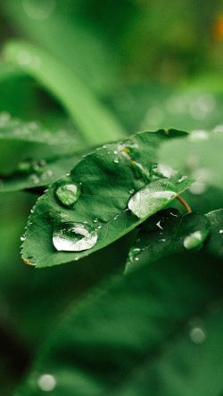 papers.co-nd37-leaf-rain-green-nature-forest-33-iphone6-wallpaper