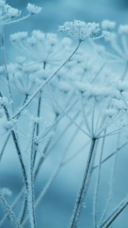 papers.co-ne20-ipad-snow-winter-flower-blue-nature-bokeh-33-iphone6-wallpaper