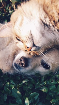 papers.co-nf34-cat-and-dog-animal-love-nature-pure-33-iphone6-wallpaper