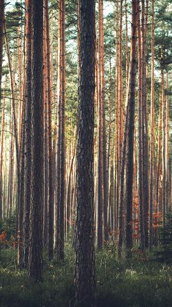 papers.co-ng66-wood-tree-mountain-summer-nature-green-33-iphone6-wallpaper