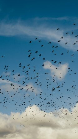 papers.co-ng83-birds-sky-animal-fly-blue-cloud-nature-33-iphone6-wallpaper