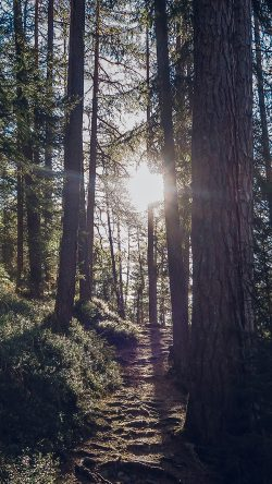 papers.co-nh09-light-wood-sun-forest-mountain-nature-33-iphone6-wallpaper