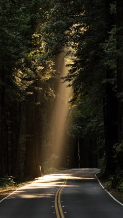 papers.co-nh15-light-road-wood-forest-way-nature-33-iphone6-wallpaper