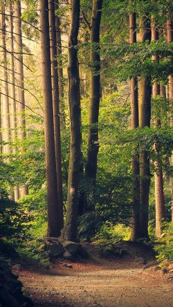 papers.co-nh29-nature-wood-forest-sunshine-mountain-33-iphone6-wallpaper