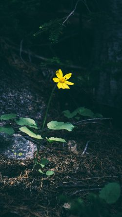 papers.co-nh35-flower-yellow-forest-wood-lonely-dark-nature-33-iphone6-wallpaper