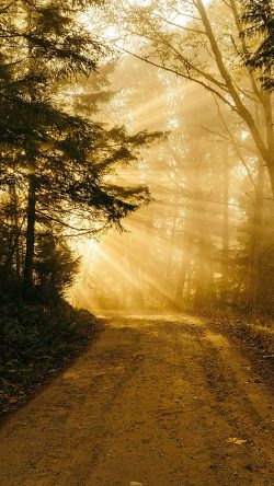 papers.co-nh73-sunny-road-wood-forest-light-tree-nature-gold-33-iphone6-wallpaper