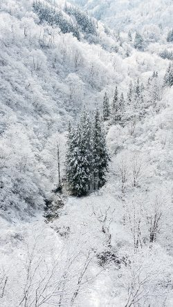 papers.co-ni66-winter-white-snow-wood-forest-mountain-33-iphone6-wallpaper
