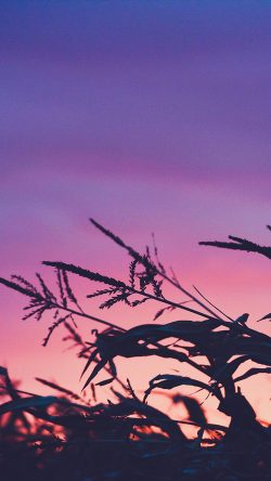 papers.co-ni69-sunset-field-forest-grass-flower-beautiful-33-iphone6-wallpaper