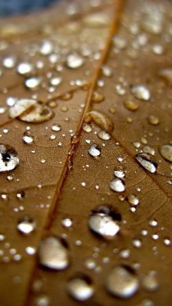 papers.co-nj07-leaf-rain-water-drop-bokeh-nature-33-iphone6-wallpaper