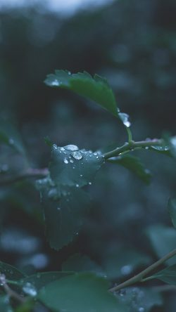 papers.co-nj39-leaf-water-rain-nature-green-33-iphone6-wallpaper