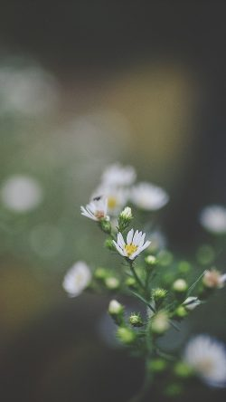 papers.co-nj64-bokeh-flower-nature-dark-33-iphone6-wallpaper