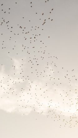 papers.co-nk09-sky-birds-clear-cloud-33-iphone6-wallpaper