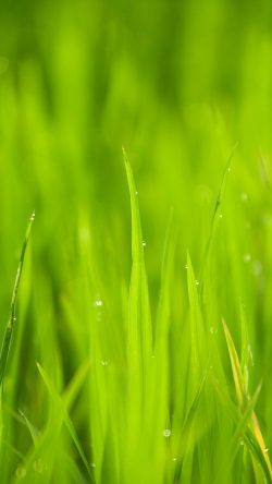 papers.co-nk13-lawn-flower-rain-bokeh-green-33-iphone6-wallpaper