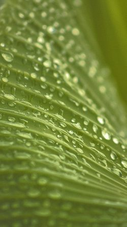 papers.co-nk91-leaf-rain-summer-green-bokeh-33-iphone6-wallpaper