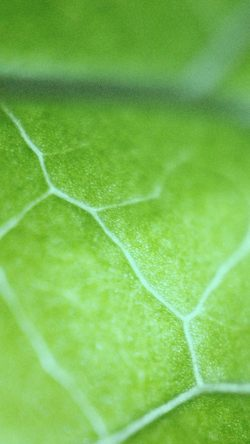 papers.co-nl26-leaf-zoom-green-nature-bokeh-33-iphone6-wallpaper