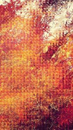 papers.co-va37-september-pattern-33-iphone6-wallpaper