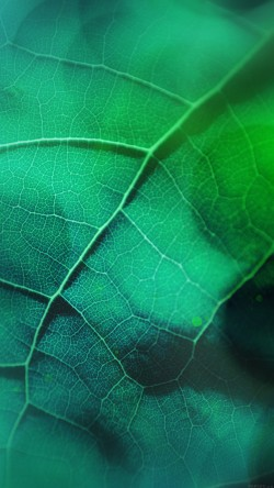 papers.co-vg59-leaf-flare-nature-green-wood-love-pattern-33-iphone6-wallpaper