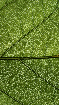 papers.co-vi52-leaf-green-texture-pattern-33-iphone6-wallpaper