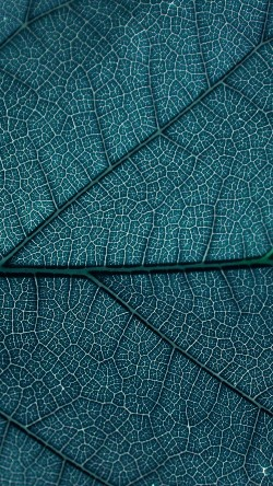 papers.co-vi54-leaf-blue-dark-nature-texture-pattern-33-iphone6-wallpaper