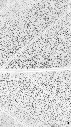 papers.co-vi56-leaf-white-bw-nature-texture-pattern-33-iphone6-wallpaper
