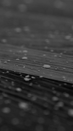 papers.co-vj00-drops-of-milk-on-floor-pattern-nature-dark-bw-33-iphone6-wallpaper