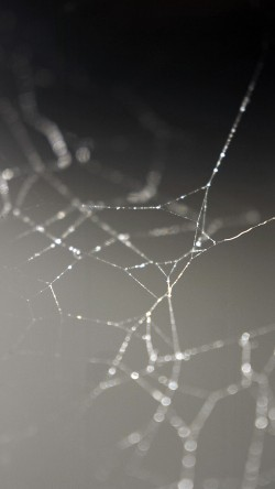 papers.co-vj15-spider-web-nature-rain-water-pattern-bw-33-iphone6-wallpaper