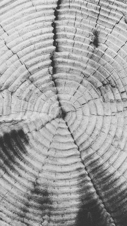 papers.co-vj38-old-tree-texture-pattern-bw-33-iphone6-wallpaper