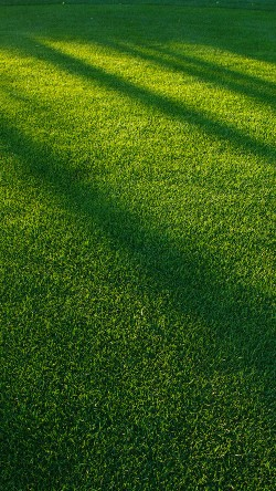 papers.co-vj85-lawn-grass-sunlight-green-pattern-33-iphone6-wallpaper