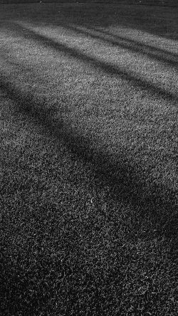 papers.co-vj87-lawn-grass-sunlight-green-dark-bw-pattern-33-iphone6-wallpaper
