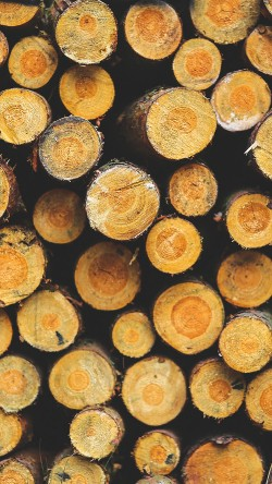 papers.co-vk17-wood-circle-piles-nature-pattern-33-iphone6-wallpaper