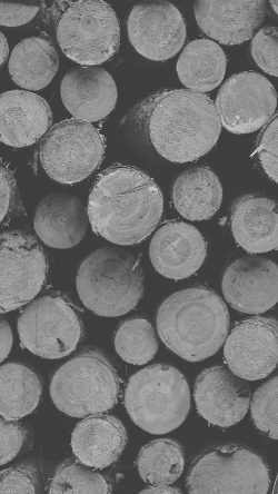 papers.co-vk20-wood-circle-piles-nature-white-dark-bw-pattern-33-iphone6-wallpaper