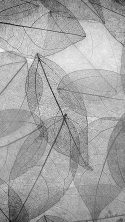 papers.co-vm25-dark-bw-leaf-art-fall-nature-pattern-33-iphone6-wallpaper