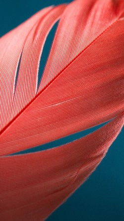 papers.co-vm98-moto-x-style-bird-feather-pattern-33-iphone6-wallpaper