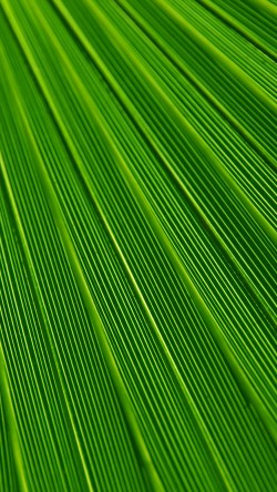 papers.co-vn29-leaf-green-surface-texture-nature-pattern-33-iphone6-wallpaper