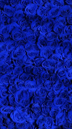 papers.co-vo44-rose-blue-pattern-33-iphone6-wallpaper