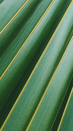 papers.co-vq74-leaf-green-line-nature-pattern-33-iphone6-wallpaper