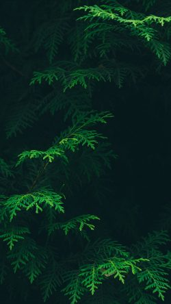 papers.co-vs88-tree-leaf-green-pattern-nature-33-iphone6-wallpaper