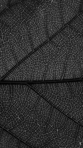 vi55-leaf-dark-bw-nature-texture-pattern