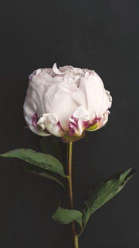 nn37-flower-white-dark-nature
