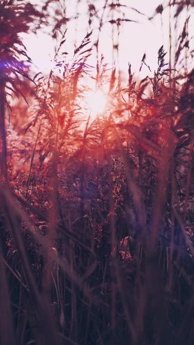 mw26-sunset-nature-flower-fall-mountain-field-red-flare